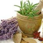 Какие травы помогут от бессонницы?